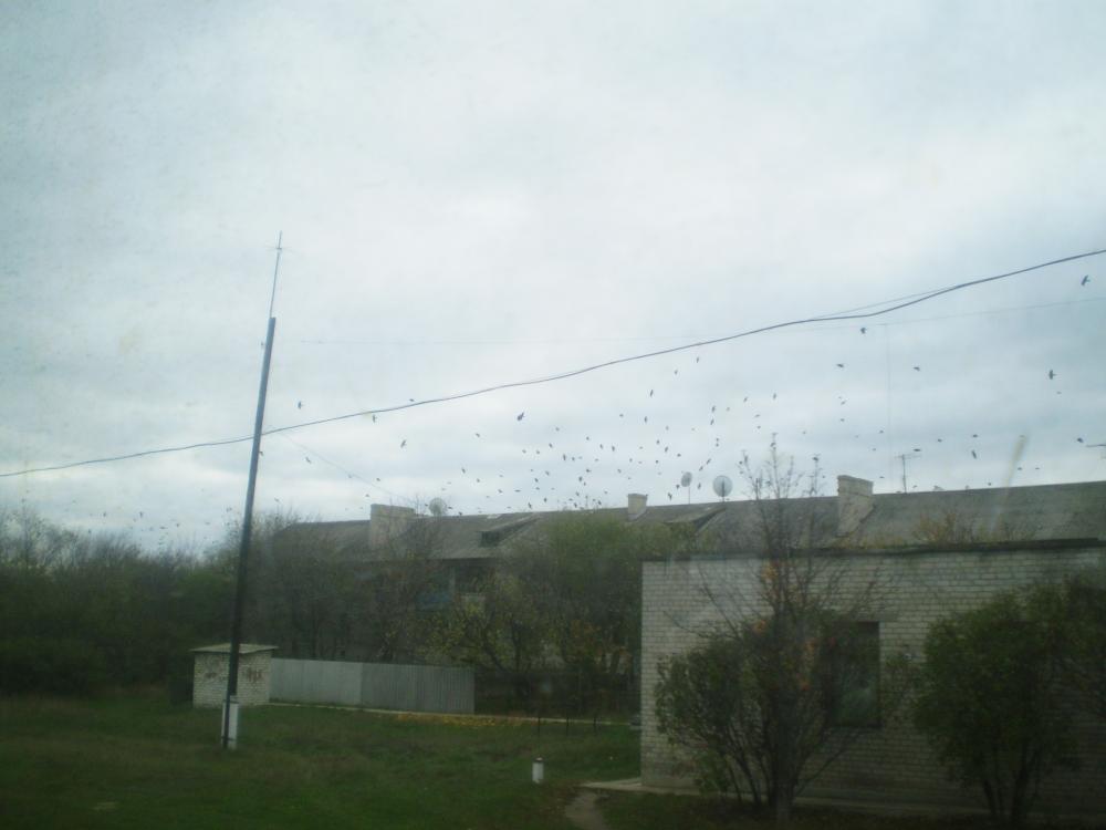 Вороны над домом